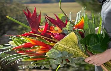 Le bougainvillier fleuri, située dans la ville du Marin, vous propose un large choix de bouquets de fleurs à offrir pour touts types d'événements au cours de l'année.